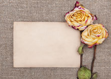 Dry roses and old paper on the burlap Stock Images