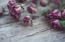 Dry roses on the old wood background Royalty Free Stock Photography