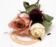 Dry Roses and Pearl Necklace. Three Dry Roses and Pearl Necklace Stock Photo