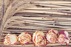 Dry roses and plants on reed background Stock Images