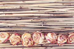 Dry roses on reed background Stock Images