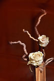 Dry roses . Royalty Free Stock Photography
