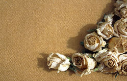 Dry roses sepia background Royalty Free Stock Photos