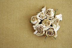 Dry roses sepia background Stock Photos