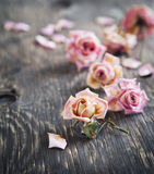 Dry roses on wooden background Royalty Free Stock Image