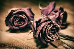 Dry roses still Royalty Free Stock Photo