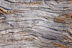 Dry rotted wood background. Close up of dry cracked rotted wood texture Stock Images