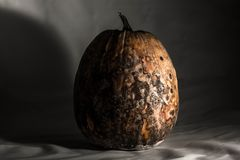 Dry and rotten pumpkin on a black white background, spoiled vegetable. Sinister food.  stock images