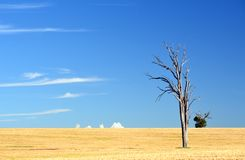 Dry rural landscape with dead tree royalty free stock photography