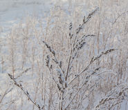 Dry sagebrush grass. Under the blizzard ice storm in winter Stock Photos