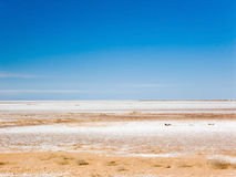 Dry salt lake. Dry salt bed of Lake Frome, Australia Royalty Free Stock Photography