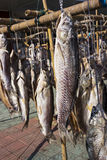Dry salted fish Royalty Free Stock Photo