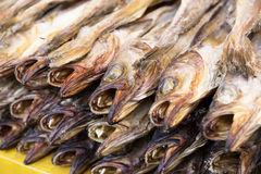 Dry salty fish Royalty Free Stock Photos
