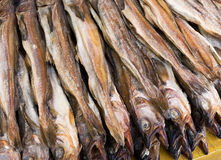 Dry salty fish Royalty Free Stock Photo
