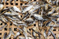 Dry salty Minnow fish. On bamboo basket Royalty Free Stock Images