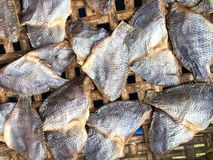 Dry salty nile tilapia fish Royalty Free Stock Photography
