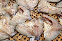 Dry salty nile tilapia fish Royalty Free Stock Photo