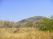 Dry savannah and blue sky , Kruger, South Africa Stock Image