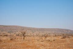 Dry savannah Stock Photography