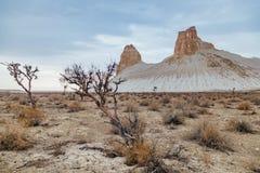 Dry saxaul in the desert on background of peaked rocks. Boszhira canyon, plateau Ustyurt, Kazakhstan royalty free stock image