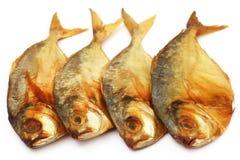 Dry scaled sardine fish Stock Photography