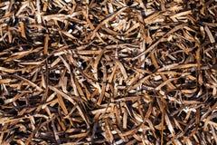 Dry Sea Moss Stock Image