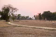 Dry season in Asia. View of the Don Khon island, Laos Royalty Free Stock Image