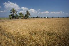 Dry season Stock Photo