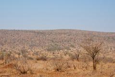 Dry season. In South African savannah Royalty Free Stock Photos