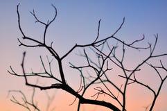 Dry season Royalty Free Stock Photography