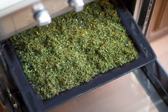 Dry seasoning fennel. On a black tray in an oven Royalty Free Stock Photography