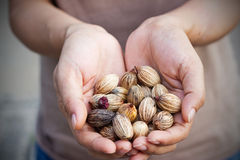 Dry seeds and grains in human hands Stock Photography