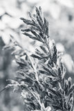 Dry seeds of  lupine monochrome Stock Images