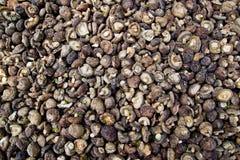 Dry Shiitake Mushrooms background Stock Images
