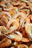 Dry Shrimp Stock Image