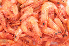 Dry Shrimps. Exotic food ingredient or snack Royalty Free Stock Photo