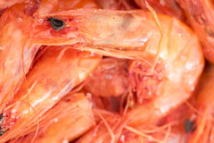 Dry Shrimps Stock Image