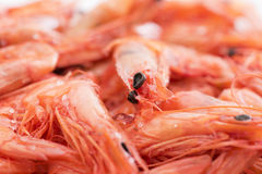 Dry Shrimps Royalty Free Stock Photography