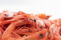 Dry Shrimps Stock Photography