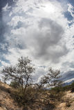 Dry Shrub in Arizona Desert. Wide angle view of dramatic sky above dry shrubs Stock Photo