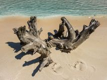 Dry snag and human footprints on sand. Royalty Free Stock Images