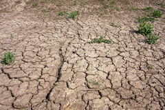 Dry soil. With some green grass stock photography