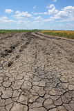 Dry soil. With some crops and a blue sky royalty free stock photo
