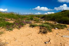 Dry soil. In background flowers and grass, blue sky with clouds royalty free stock photography
