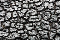 Dry soil Stock Images