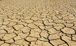 Dry soil in arid areas Royalty Free Stock Image