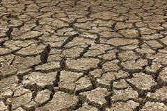 Dry soil Arid on a summer season Royalty Free Stock Image