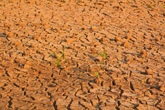 Dry soil background Royalty Free Stock Photography