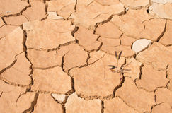 Dry soil. Background  color asian Stock Photography
