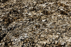 Dry Soil Background Stock Photography